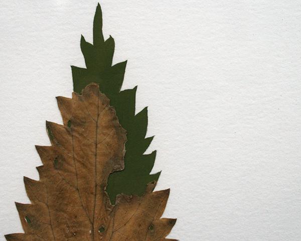 Sjoerd Buisman - Bladreconstructie, Grote brandnetel (Urtica diocea) - 65x1000cm Herbarium en gouache op papier (detail)