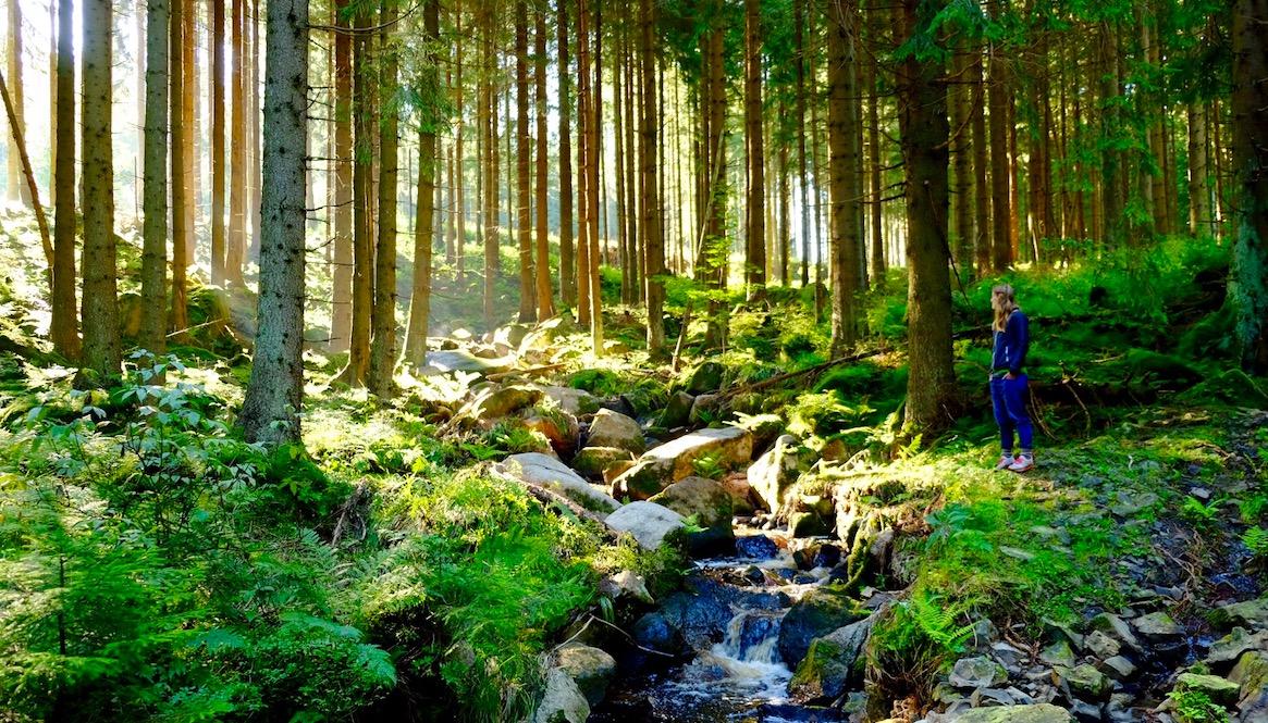 LOST TRACK Reiseblog Deutschland Heimat erkunden unterwegs Roadtrip on the road Harz Märchenwald Bachlauf Wandern