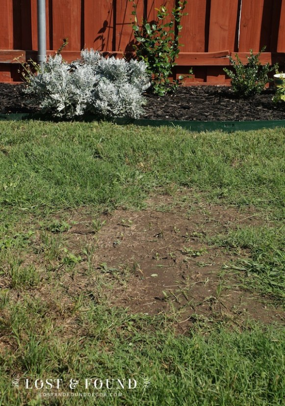 bare spots in your lawn