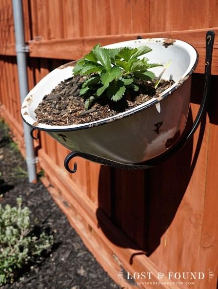 enamelware pan repurposed into plant hanger