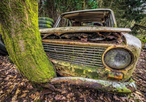 Lost-in-the-Woods-2.jpg