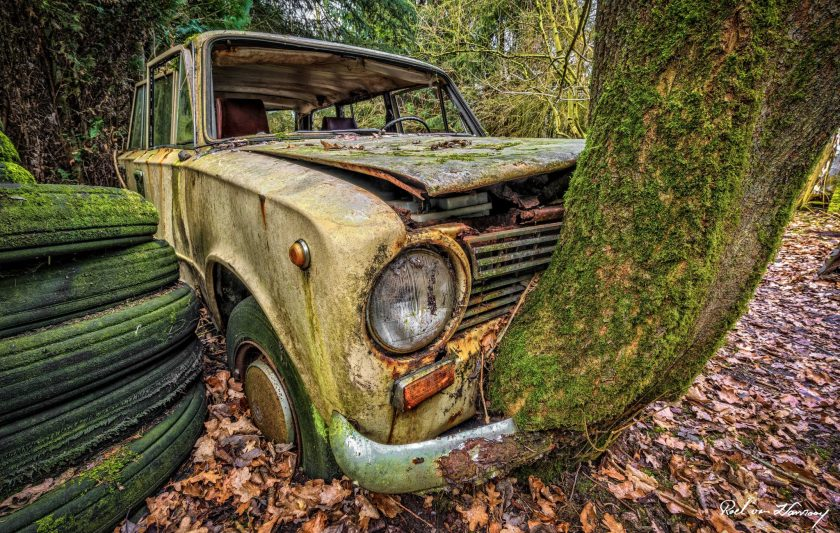 Lost-in-the-Woods-4.jpg