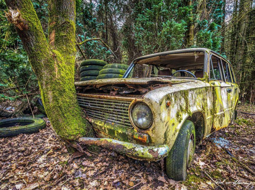 Lost-in-the-Woods.jpg
