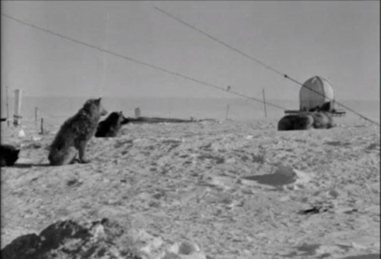 sno-cats-antarctica4.jpg