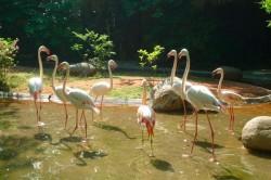Flamingoes in Shanghai Zoo