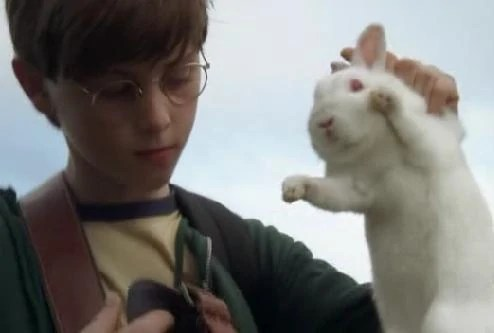 Ben and the bunny