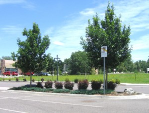 A Low Water-Use Xeriscape Parking Lot Island