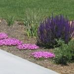 photo of spring landscape
