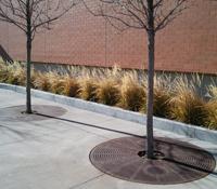 Ornamental Grasses in Winter