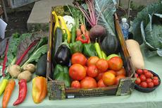 urban garden produce