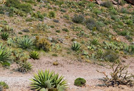 native desert landscaping