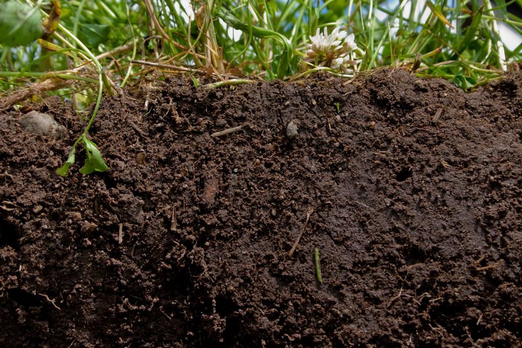 Soil under turf