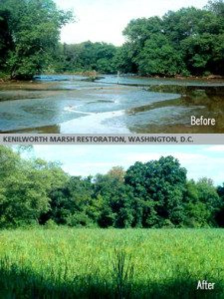 Restored Kenilworth Marshland near Washington DC