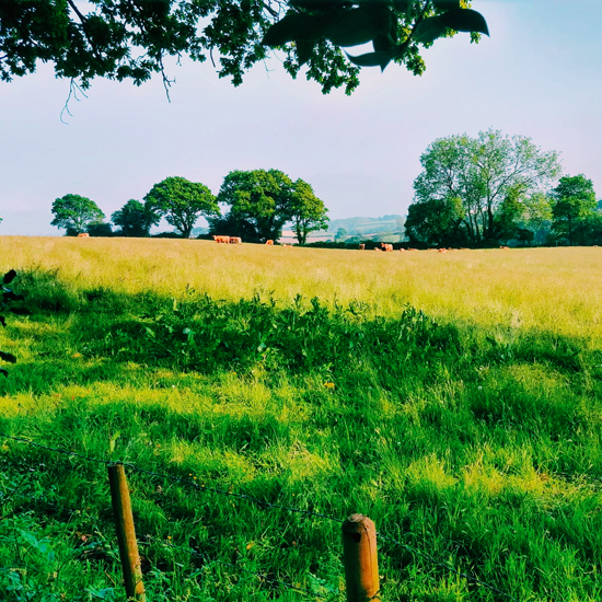 Cuckoo Down Farm