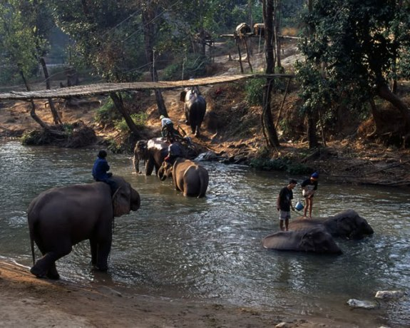Chiang Mai Day Tour to Mae Win Elephant Camp