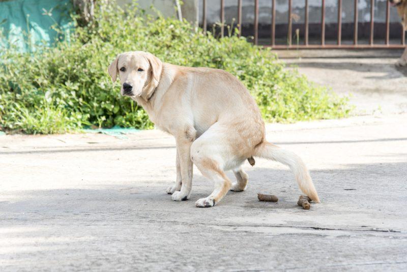 hondenpoep