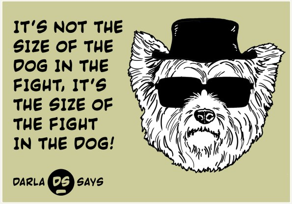 DARLA-DOG-IN-THE-FIGHT