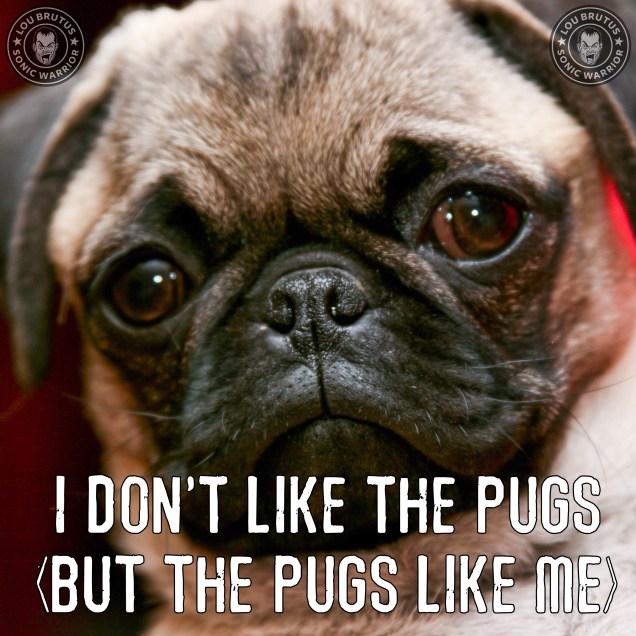 meme-dog-pugs
