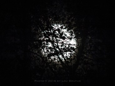 moon-111316-004-trees-web