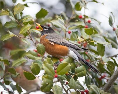2019-bird-03-1-WEB