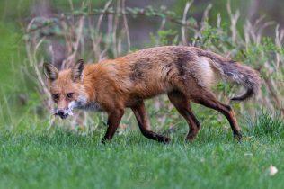 041121-04-FOX-WEB