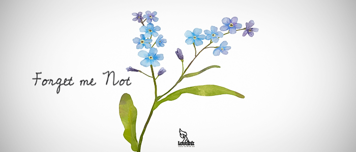 forget-me-not-post-cover-Loudink