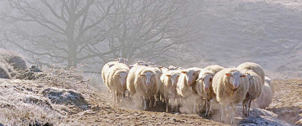 Louet Sheep professional spinning equipment