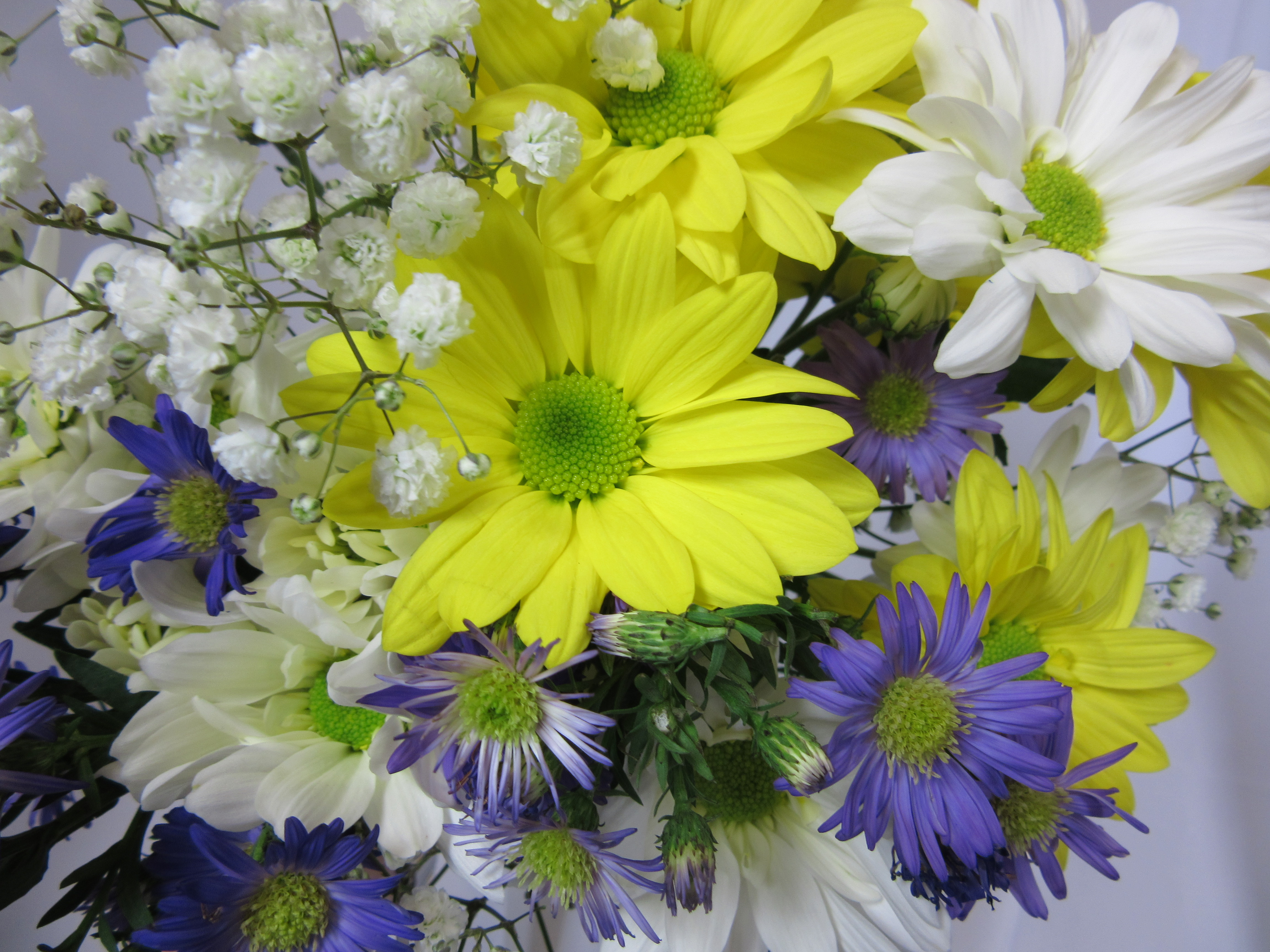 A Daisy A Day Cut Flowers Sudbury Flower Delivery L