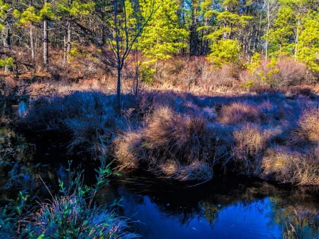pinelands-savanna