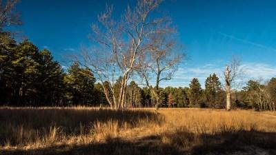 pinelands-tree-190071
