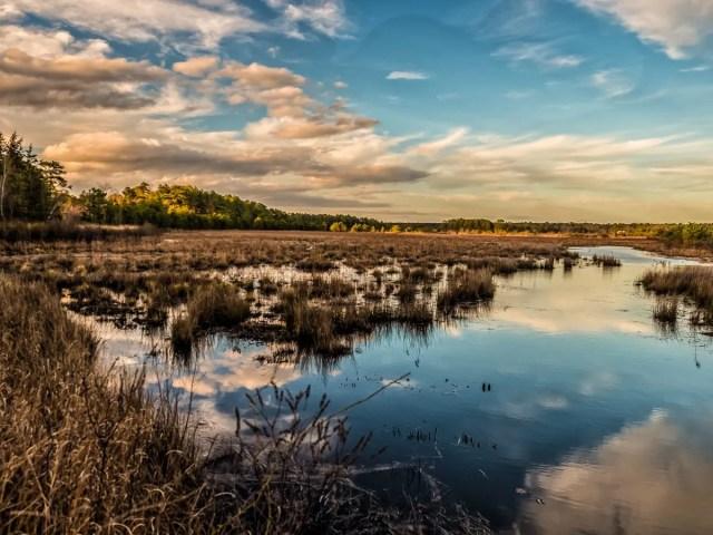 fpp-pinelands-landscape