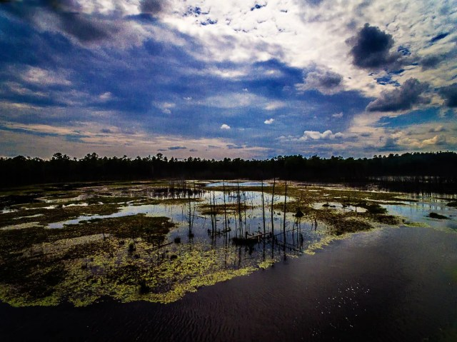 wharton-state-forest-photo-2