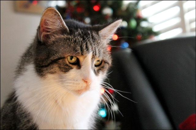 ed-christmas-tree-3