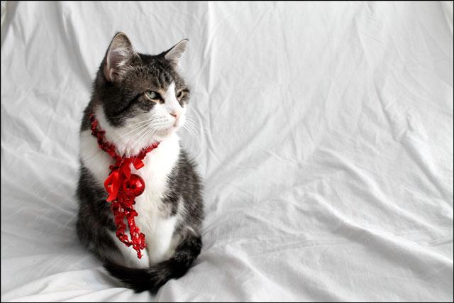 eddie-christmas-cat-08