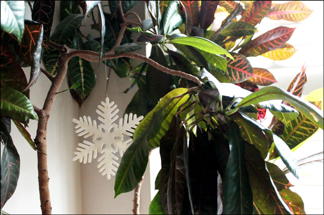 snowflake-in-a-plant