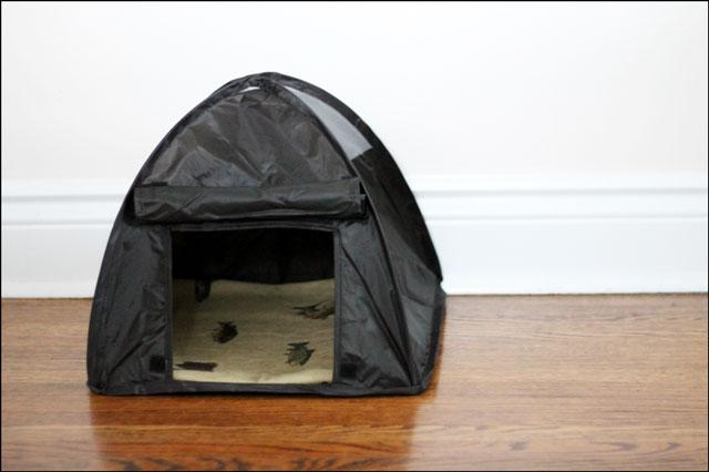 eds-tent