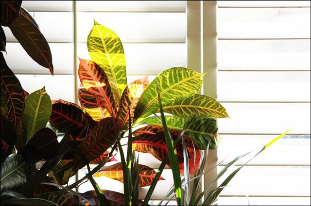 plants-in-the-window