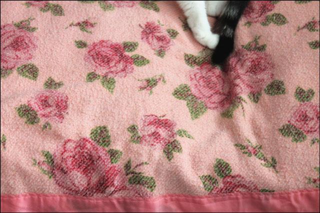 ed-on-pink-blanket
