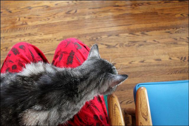 eddie-on-my-lap-4