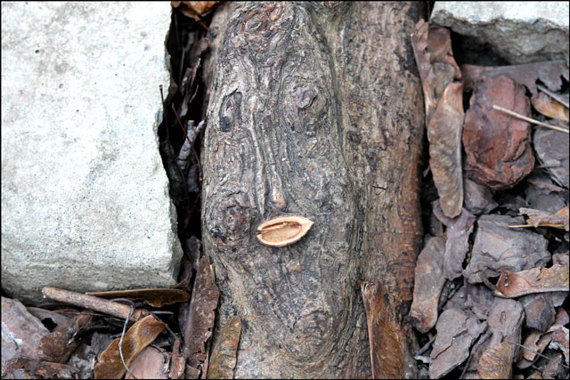 tree-root-face