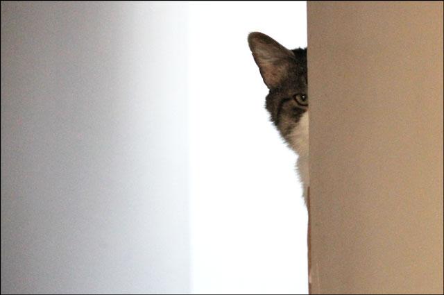 cat-peeking-around-corner