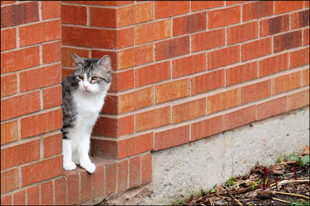 ed-brick-wall