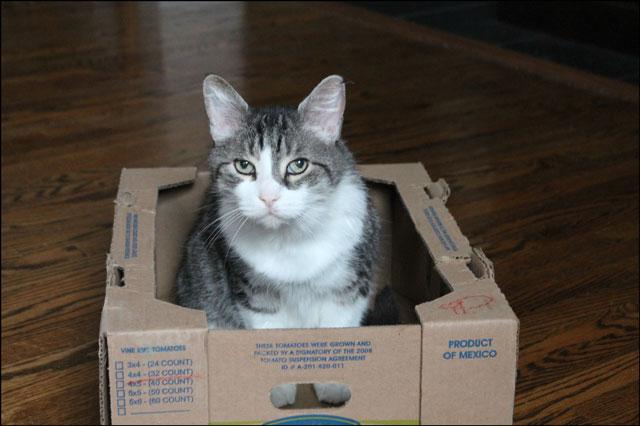 eddie-in-tomato-box-04