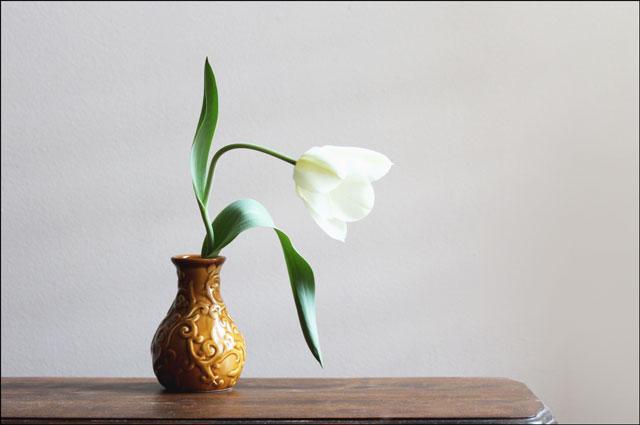 tulip-in-case-03b