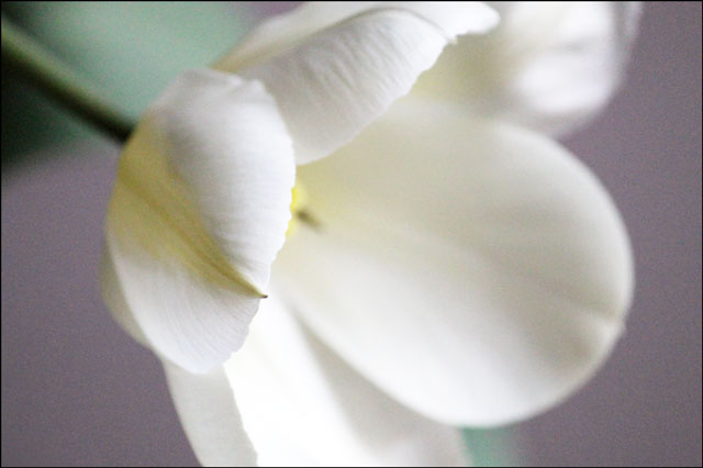 tulip-in-vase-03d
