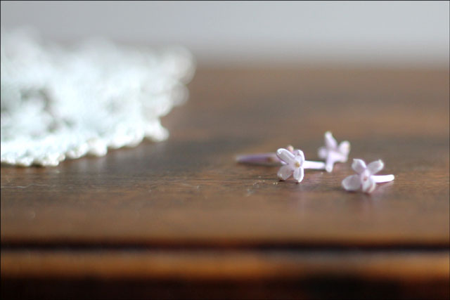 individual-lilac-flowers