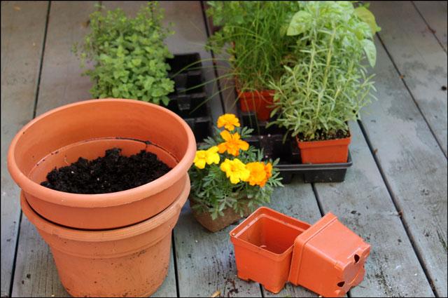 potting-herbs-2
