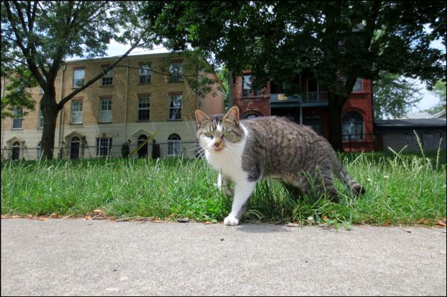 cat-in-the-park-05