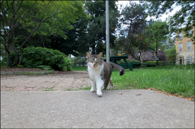 cat-in-the-park-07