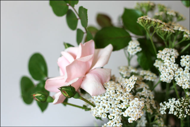 pink-rose-with-yarrow-3